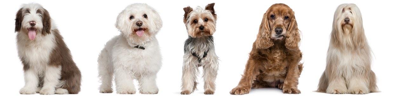 Tierarzt für Hunde