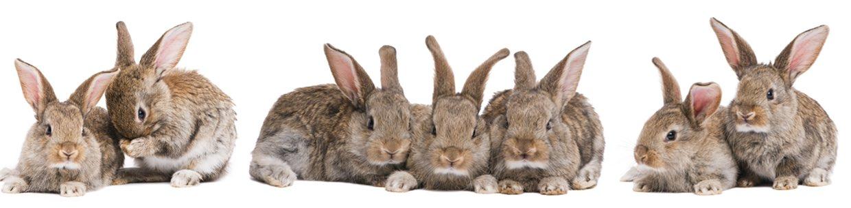 Wir sind spezialisiert auf die Behandlung von Nagern und Kleintieren aller Art