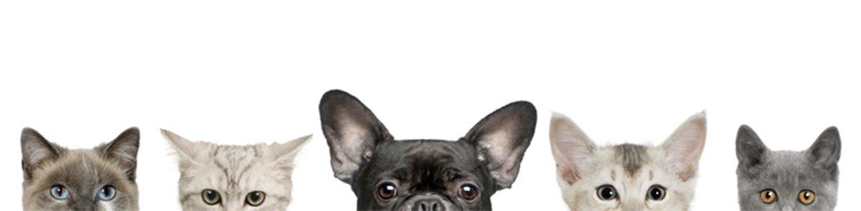 Tierarztpraxis Rödiger - Ihr Tierarzt für Kleintiere und Reptilien