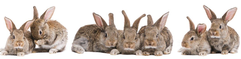 Wir sind spezialisiert auf die Behandlung von Kleintieren aller Art - Tierarzt in Berlin - Tier-Notdienst