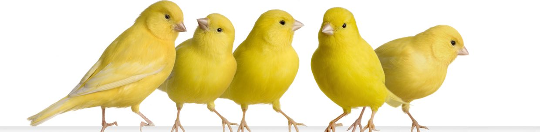 Tierarzt Vögel