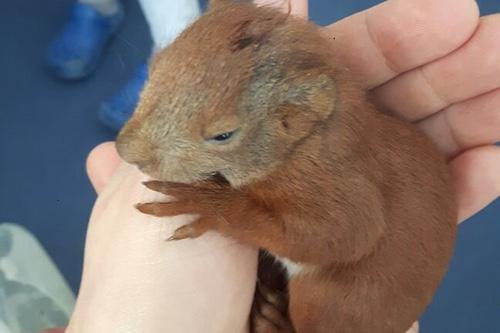 Eichhörnchen-Jungtier gefunden?