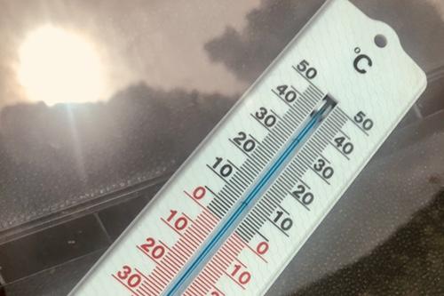 Hitze: Risiko für Hund und Katze